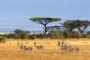 Riserva africana: Paradise