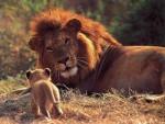 leon - Leone Maschio (3 anni)