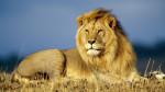 leon - Leone Maschio (5 anni)