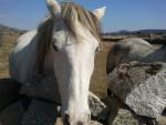 Cavallo Linda - ( (5 anni))