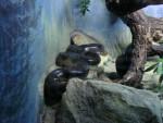 serpent -
