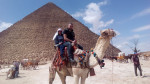 Camel - Maschio